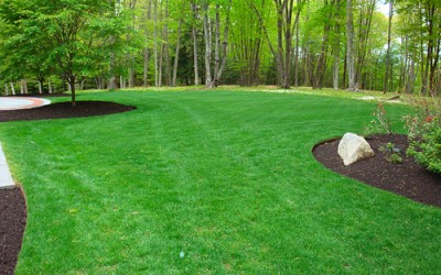 Fertilizing Your Lawn – Tips and Techniques