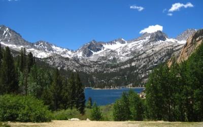 Sierra Nevada Evergreen Trees
